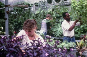 Unidentified students working in the Cincinnati State greenhouse - ca. 1980s