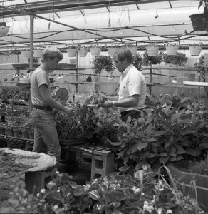 Jerry Krismer (right), former Ornamental Horticulture instrutor with unknown male student, date unknown
